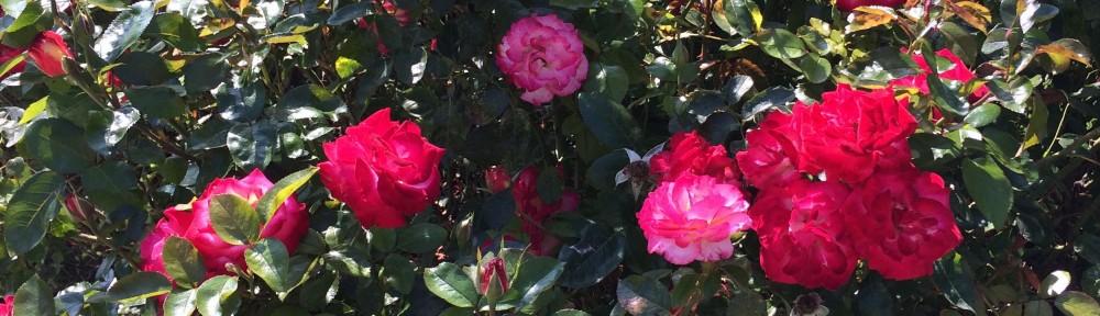 pretty_pinks